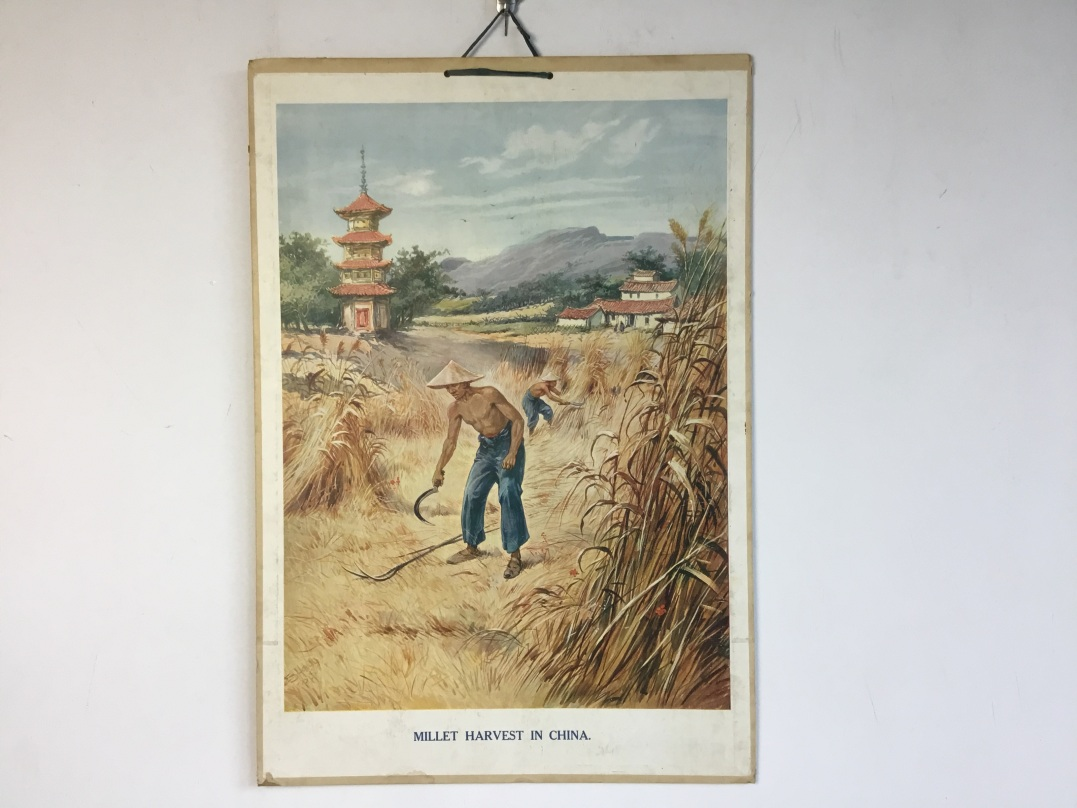 Schoolprent van Millet harvest in China